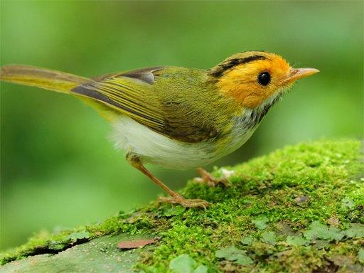Birds Slide